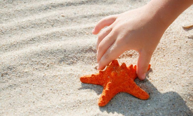 Deniz Yıldızının Hikayesi - Öyküsü
