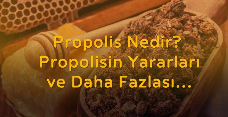 Propolis Nedir? Yararları, Kullanımları ve Daha Fazlası..